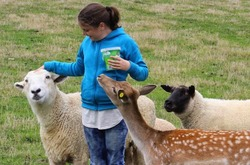 All the animals want to be your friend when you have food at Dusky Ridges farm stay bed and breakfast